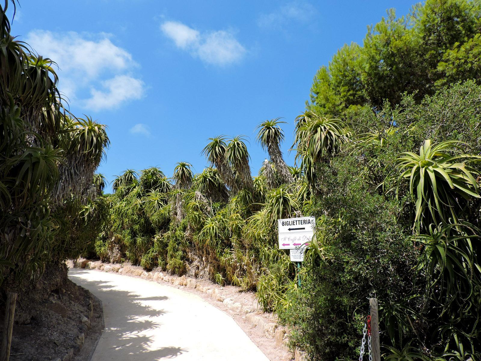 il sentiero contornato di fichi d'india che porta all'ingresso dell'isola di Mozia