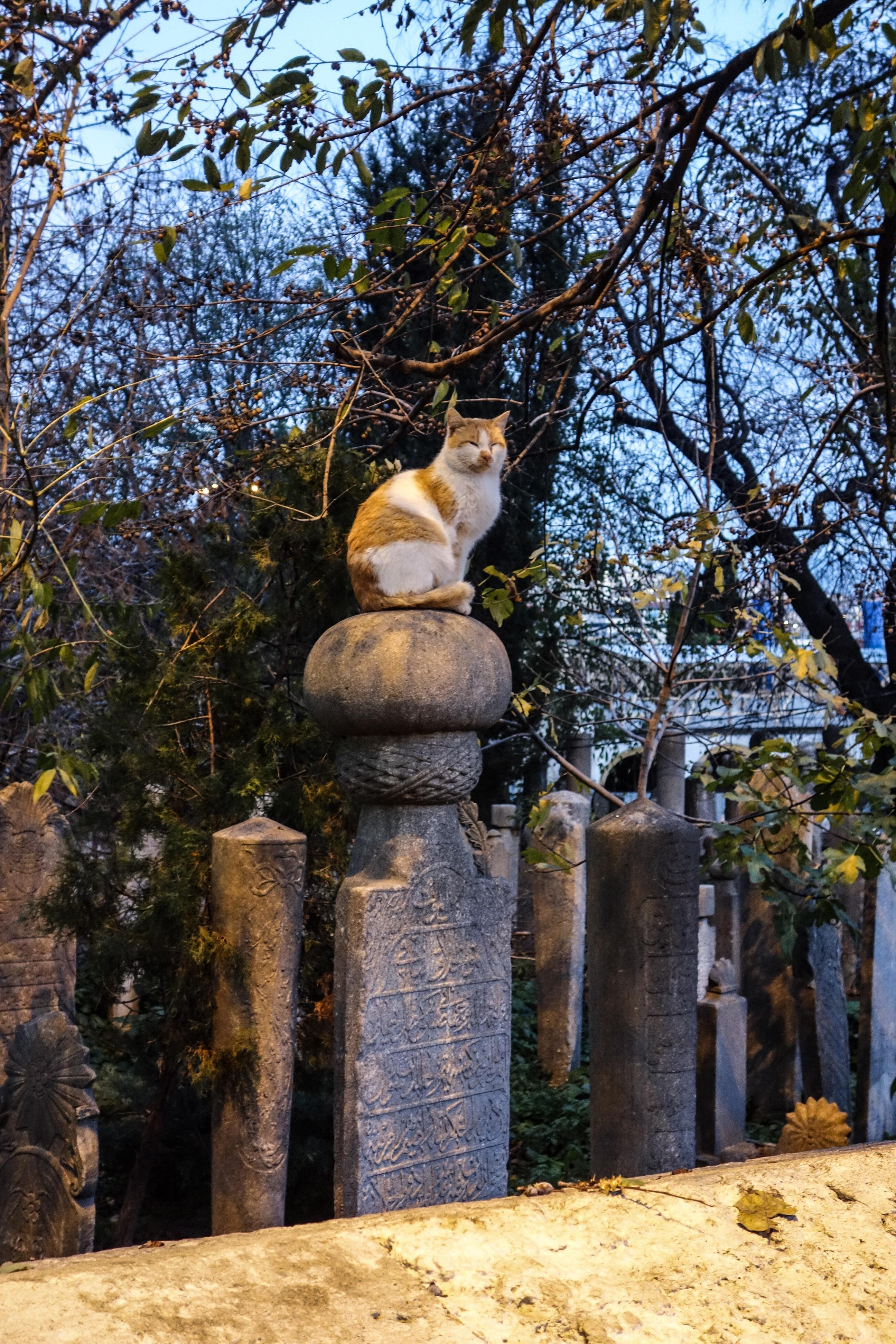 I veri padroni di Eyup sono i gatti