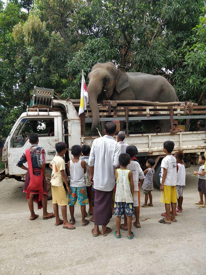 elefanti a mawlamayne