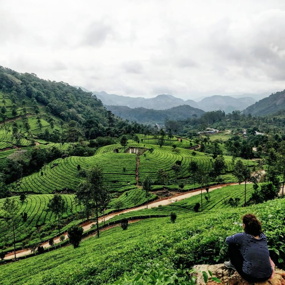 Munnar, le piantagioni di the più belle che abbiamo mai visto!
