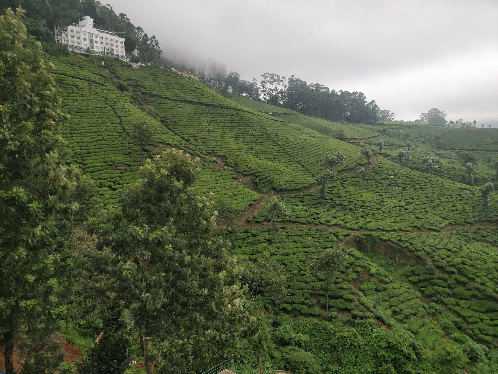 Le piantagioni di tè di Munnar