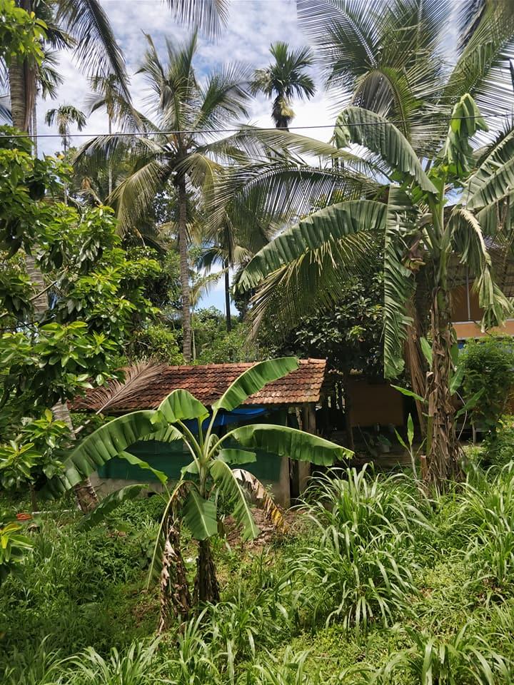 capanne immerse nella natura del Wayanad