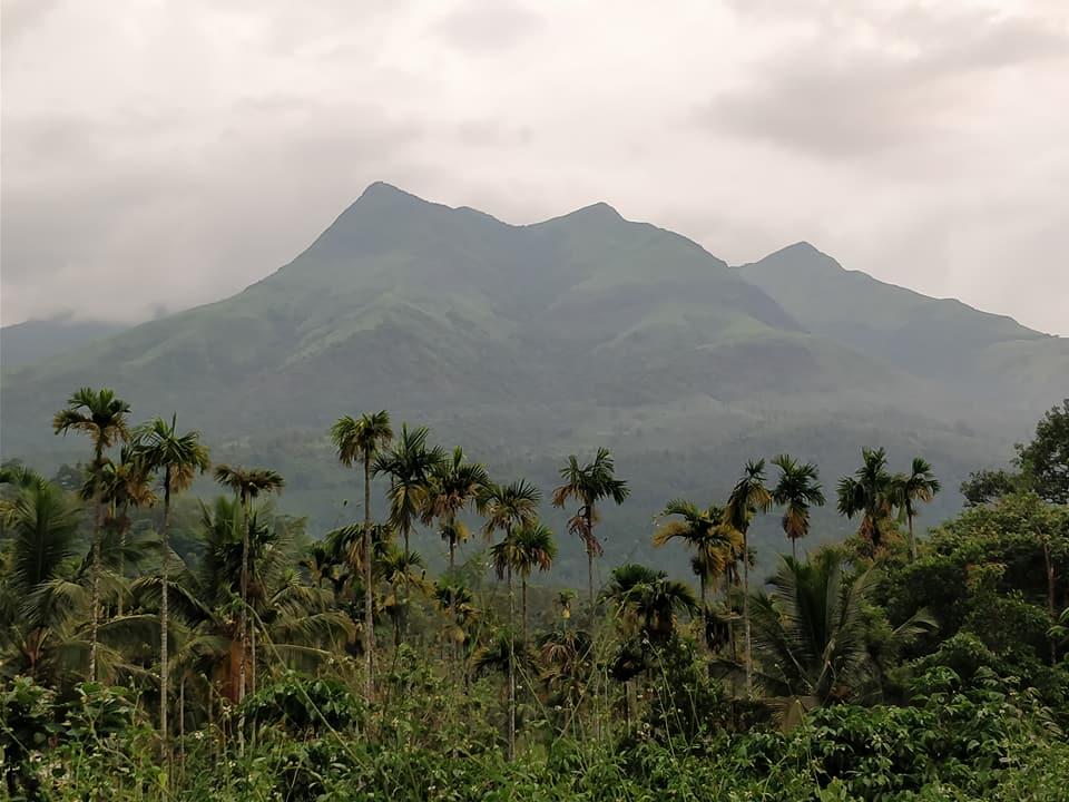 montagne e palme nel Wayanad