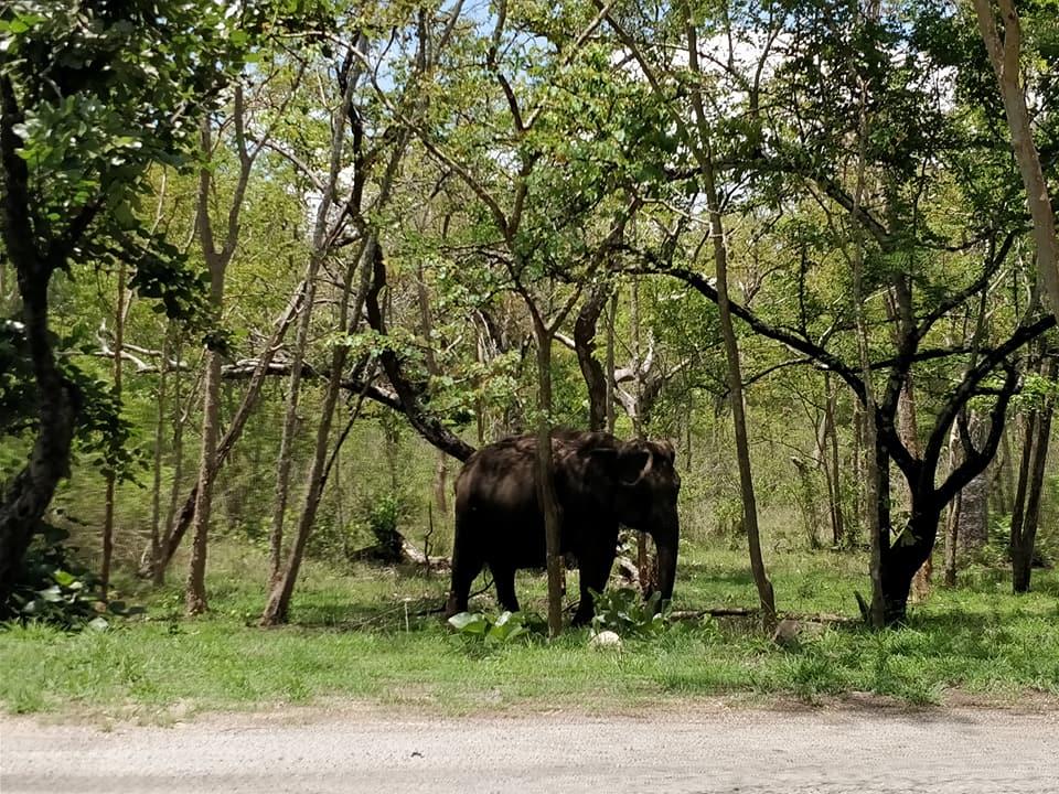 elefantessa nel Bandipur National Park
