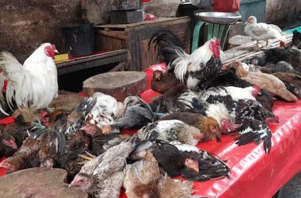 lapaz market a iloilo nelle filippine