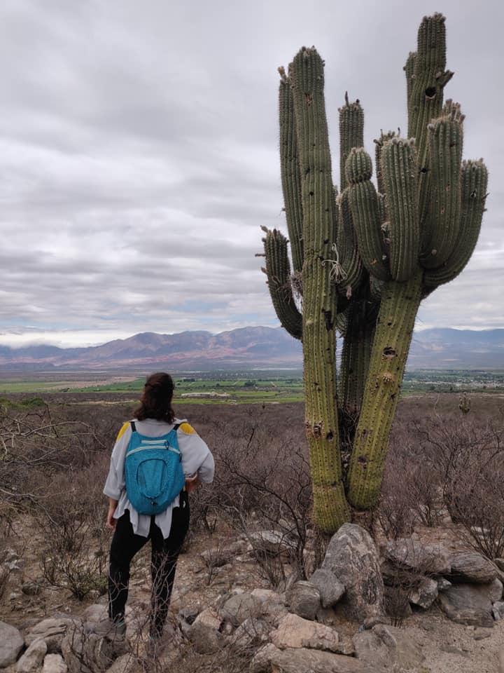 cactus gigante dalle parti della bottega domingo molina a cafayate