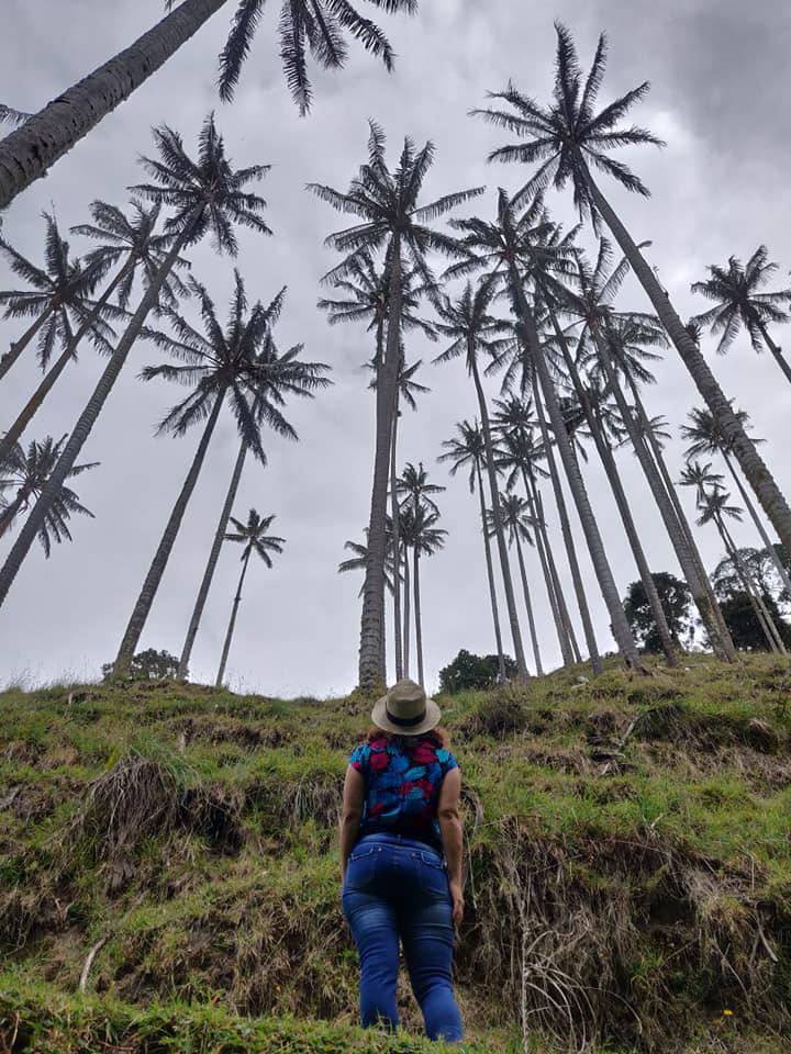 La valle di Samaria con le sue iconiche palme da cera in Colombika