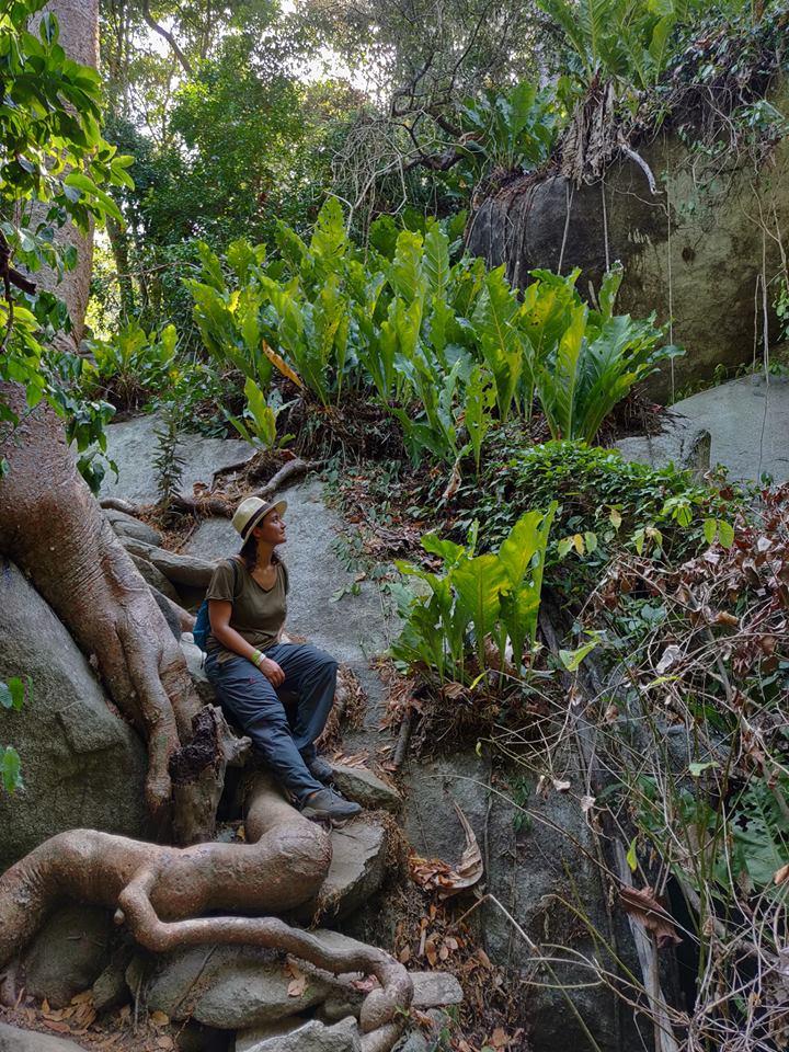 La natura all'interno del Parque de Tayrona