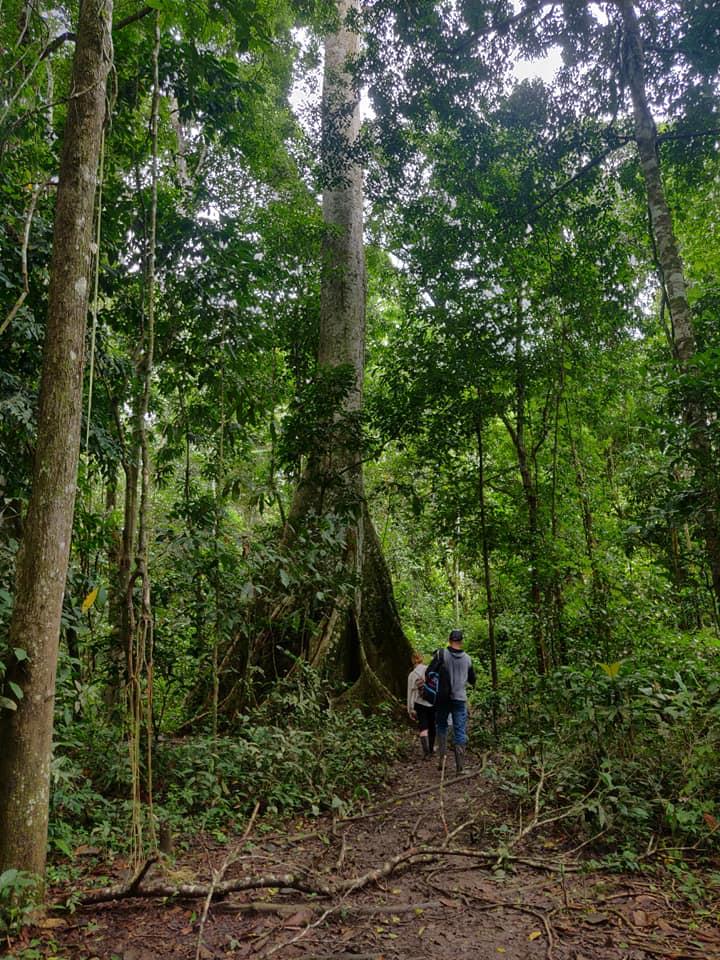 La foresta amazzonica in tutto il suo splendore nei pressi di Iquitos