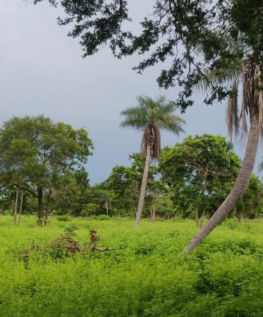 i dintorni giunglosi di san jose de chiquitos