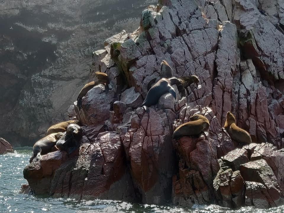 foche su uno sperone di una delle isole Ballestas vicino Paracas