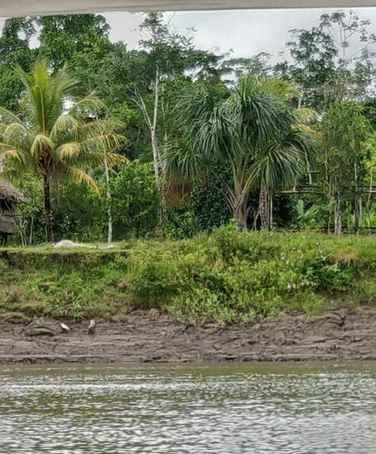 La giungla amazzonica lungo il fiume Napo, affluente del Rio delle Amazzoni tra Perù ed Ecuador