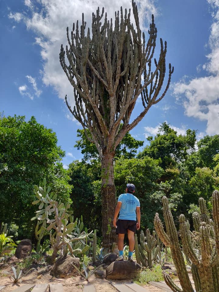 cactus gigante nel giardino botanico di santa cruz de la sierra in Bolivia